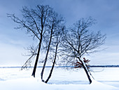 Trees on the banks of Lake Starnberg in winter with snow, Tutzing, Bavaria, Germany