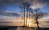 Trees at sunrise on the shore of Lake Starnberg, Tutzing, Bavaria, Germany
