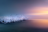 Frosty winter morning with frosted reeds at sunrise on Lake Starnberg, Bavaria, Germany