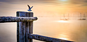 Seagull on a wooden post at sunrise on Lake Starnberg, Bavaria, Germany
