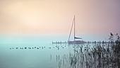Boot in verlassener Marina bei nebliger Herbststimmung, Seeshaupt, Bayern, Deutschland