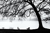 Tree silhouette on Lake Starnberg, Tuting, Bavaria, Germany, black and white