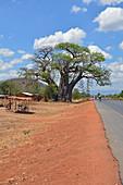 Malawi; Central Region; auf der Nationalstraße M5 Richtung Süden bei Chipoka; riesiger Baobab Baum an der M5