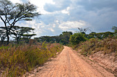 Malawi; Northern Region; Nyika Mountains; typical bush landscape on the M9; dirt road with acacias