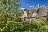 Historisches Reetdachhaus in Morsum, Sylt, Schleswig-Holstein, Deutschland