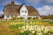 Historic thatched roof house in Keitum, Sylt, Schleswig-Holstein, Germany