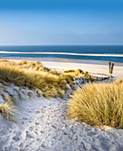 Path in the dunes in the Ellenbogen nature reserve near List, Sylt, Schleswig-Holstein, Germany