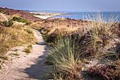 Path through the dunes of the Braderuper Heide, Sylt, Schleswig-Holstein, Germany