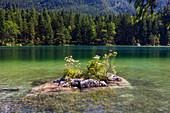 Small island in Hintersee, Ramsau, Berchtesgadener Land, Upper Bavaria, Alps, Germany
