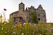 Flower meadow in front of Cadolzburg Castle in the evening light, Cadolzburg, Franconia, Bavaria, Germany