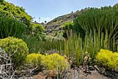 "Cactus plants in the botanical garden ""Jardin Botanico"", Gran Canaria, Spain"