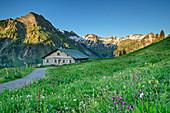 Weg führt durch Blumenwiese auf Alm zu, Giebel, Schochen und Seeköpfe im Hintergrund, Käseralp, Hintersteiner Tal, Allgäuer Alpen, Allgäu, Bayern, Deutschland