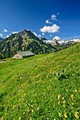 Flower meadow with alpine building, gable, Schochen and Seeköpfe in the background, Käseralp, Hintersteiner Tal, Allgäu Alps, Allgäu, Swabia, Bavaria, Germany