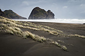 Dunes at Piha Beach to the west in Auckland, New Zealand's largest city.