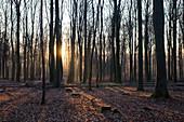Sunrise on a winter morning in the Westerwald, Rhineland Palatinate.