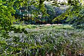 Duestere ponds, nature reserve near Eiche, Potsdam, State of Brandenburg, Germany