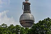 Die Kuppel des Fernsehturms hinter Bäumen, Berlin, Deutschland