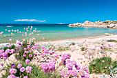 Riu Li Saldi beach, Aglientu, Sassari province, sardinia, italy, europe.
