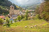The goats of Castle Landeck, Tirol, Austria, Europe