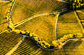 Aerial view of vineyard textures in autumn. Barolo wine region, Langhe, Piedmont, Italy, Europe.