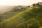Vineyards in Langhe during the sunset up the hill of Santo Stefano Belbo ,Piedmont, Italy