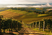 Hügel in Langhe, Novello, Piemont, Italien