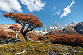 Tree and autumn scenery with Fitz Roy range in the background. El Chalten, Santa Cruz province, Argentina.