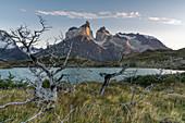 Tote Bäume am Nordenskjöld-See und die Hörner von Paine im Hintergrund im herbstlichen Morgengrauen, Nationalpark Torres del Paine, Provinz Ultima Esperanza, Chile