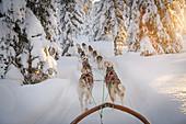 Hundeschlittenfahrt in Lappland, Arvidsjaur, Auktsjaur, Schweden