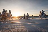 Winterlandschaft in Lappland, Arvidsjaur, Auktsjaur, Schweden