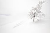 Ein Baum im Neuschnee über Mottarone, Novara, Verbano Cusio Ossola, Piemont, Italien, Südeuropa