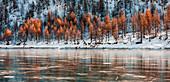 Bäume reflektieren sich bei Codelago im Winter, Naturpark Alpe Veglia und Alpe Devero, Verbano Cusio Ossola, Piemont, Italien, Südeuropa