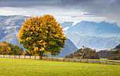 An autumnal view of the Ritten (Renon) with a beautiful yellow tree and the Eisack Valley in the background, Bolzano province, South Tyrol, Trentino Alto Adige, Italy
