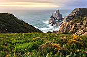 Spring blooms on the cliffs overlooking the beach of Praia da Ursa. Cabo da Roca, Colares, Sintra, Portugal, Europe.