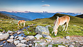 a view of the Sarntal Alps where horses graze free and with the Dolomites in the background, Bolzano province, South Tyrol, Trentino Alto Adige, Italy