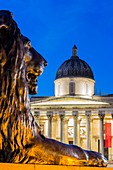 United Kingdom, London, Westminster, Trafalgar Square, lion sculpted by Sir Edwin Landseer (1867) at the foot of the column of Admiral Nelson and basically the National Gallery opened in 1824