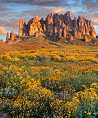 Wildblumen und Berge, Superstition mountains, lost Dutch state park, Arizona, USA