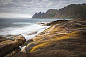 SEAWEED COLORING THE ROCKS ON THE BEACH OF TUNGENESET, SENJA, NORWAY