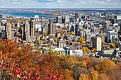 AUTUMN COLORS IN MONT-ROYAL PARK AND VIEW OF THE BUSINESS DISTRICT OF THE CITY OF MONTREAL, THE SAINT LAWRENCE RIVER AND JACQUES CARTIER BRIDGE, QUEBEC, CANADA