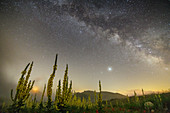 Sternenhimmel mit Milchstraße über Feld mit Königskerzen, Nationalpark Gran Sasso, Parco nazionale Gran Sasso, Apennin, Abruzzen, Italien