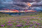 Cloudy mood over meadows of flowers, Gran Sasso National Park, Parco nazionale Gran Sasso, Apennines, Abruzzo, Italy