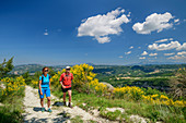 Man and woman hiking through flowering gorse, Grande Anello dei Sibillini, Sibillini Mountains, Monti Sibillini, National Park Monti Sibillini, Parco nazionale dei Monti Sibillini, Apennines, Marche, Umbria, Italy