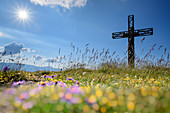 Summit cross of Monte Cardosa with flower meadow in the foreground, Monte Cardosa, Grande Anello dei Sibillini, Sibillini Mountains, Monti Sibillini, National Park Monti Sibillini, Parco nazionale dei Monti Sibillini, Apennines, Marche, Umbria, Italy