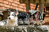 Mountain boots stand in front of alpine pasture, shepherd dog in the background, Großes Walsertal Biosphere Reserve, Lechquellen Mountains, Vorarlberg, Austria