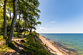 View of the forest and the steep coast, Weissenhäuser Strand, Eitz, Baltic Sea, Ostholstein, Schleswig-Holstein, Germany