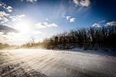 Winter landscape in the snowstorm in Ostholstein, Klaustorf, Schleswig-Holstein, Germany