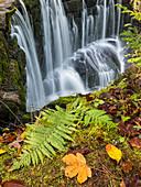 Fern at the Geratser waterfall near the city of Sonthofen, Allgäu region, Germany
