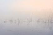 Morning mist in the moss in Weilheim