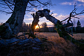 Sonnenaufgang am Hochschachten, Zwiesel, Bayern, Deutschland