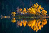 Eibseeinsel im goldenen Herbstkleid, Grainau, Bayern, Deutschland